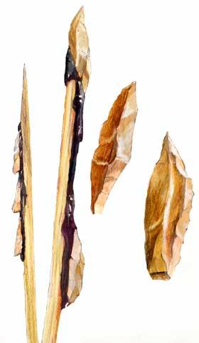 Pijl- en speerpunten uit het einde van de Oude Steentijd. Een paar zijn met houtteer aan een schacht vastgemaakt. (Tekening: Kelvin Wilson)